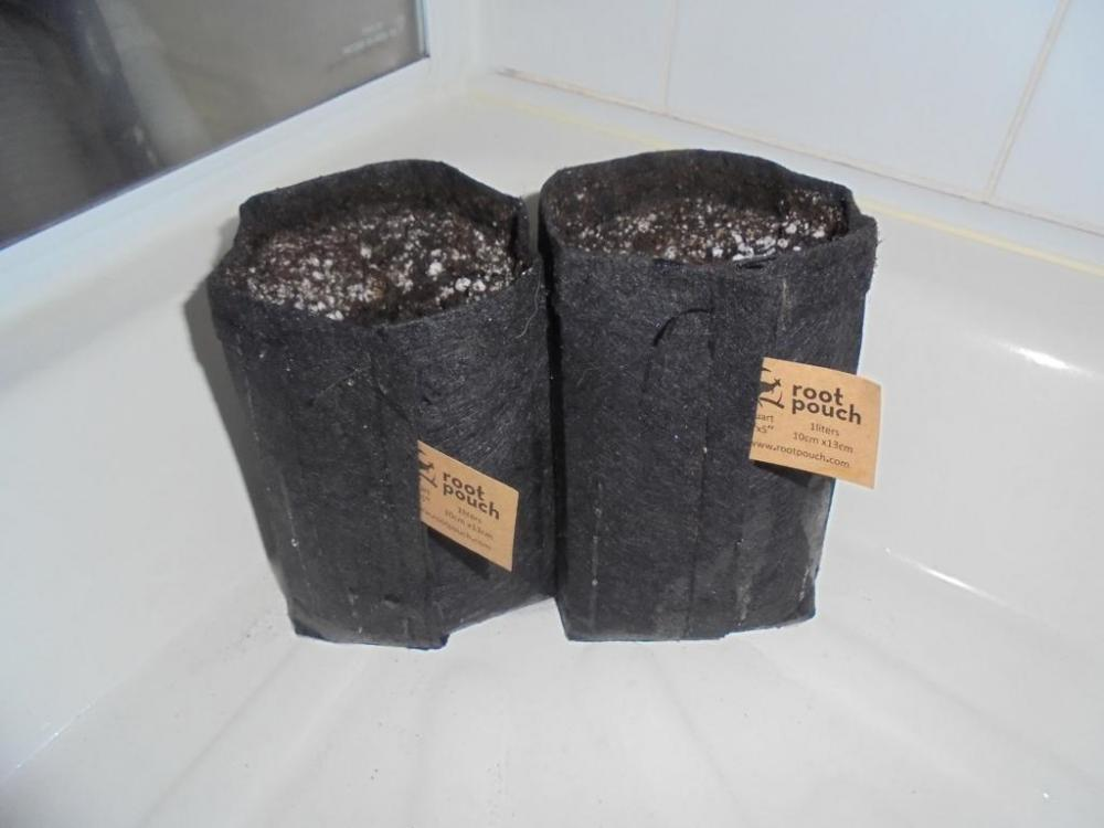 02may-2019-root-pouches-all-mix-watered.jpg