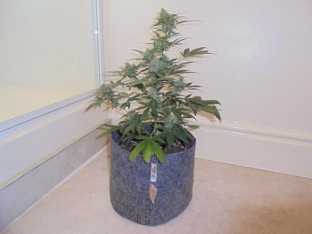 05may-2019-sweet-mango-second-smallest-plant.jpg