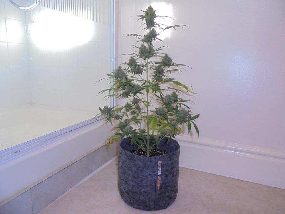 05may-2019-sweet-mango-second-tallest-plant.jpg