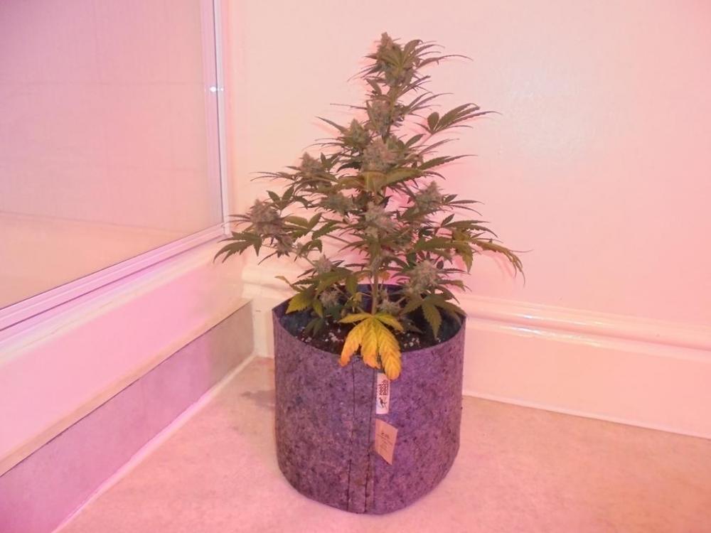 12may-2019-sweet-mango-second-smallest-plant.jpg