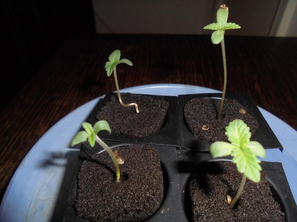 27may-2019-svk-seedlings.jpg