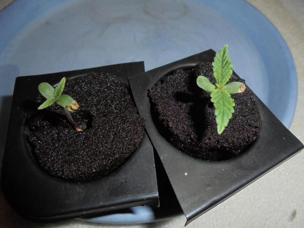 26nov-2019-jh-seedlings.jpg