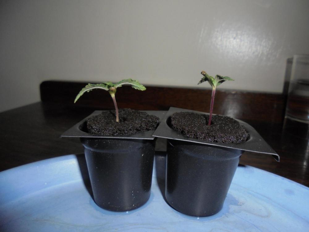 29nov-2019-jh-seedlings.jpg