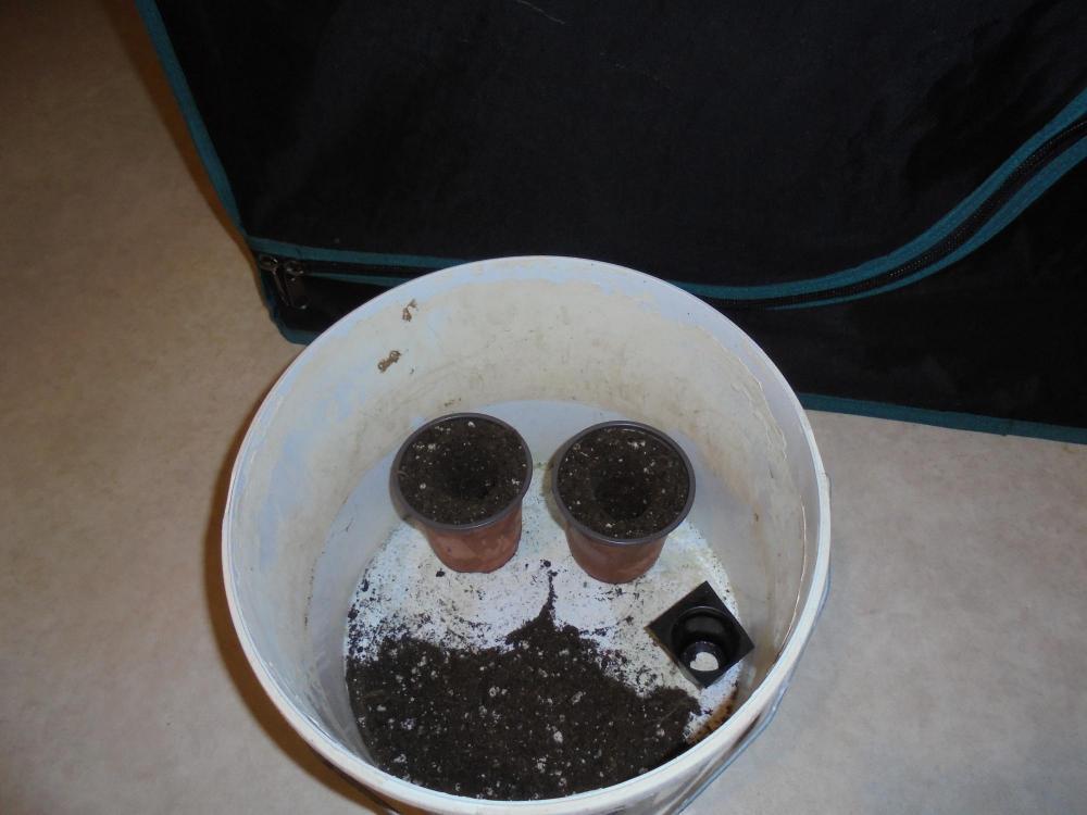29nov-2019-plant-pots.jpg