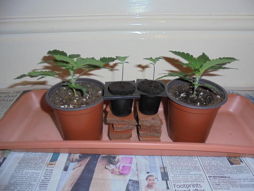 5df638bd39526_15dec-2019-jh-p1-seedlings.thumb.jpg.56aacd4b91c3aafa758649edaf0941e7.jpg