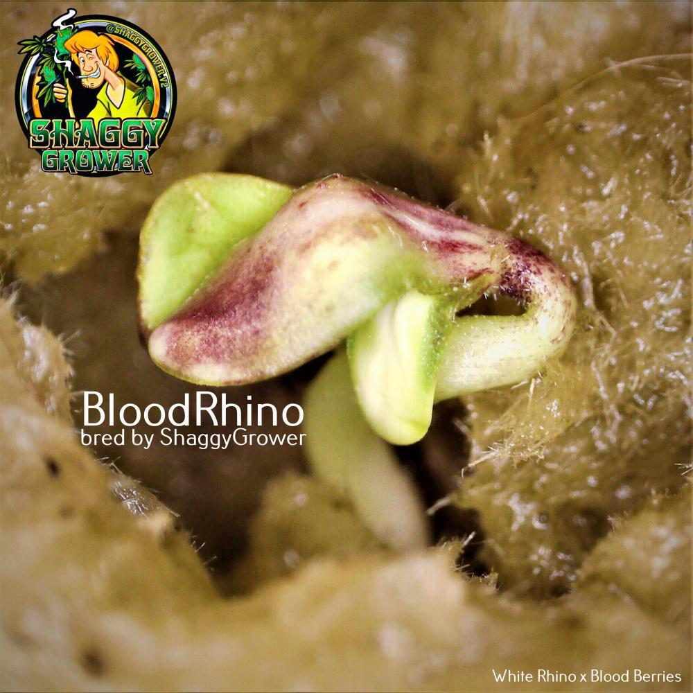 BloodRhino_triple_leaf_2nd_logo.thumb.jpg.88cadbd51ce8ad9b9a850ae0af2a1cf1.jpg