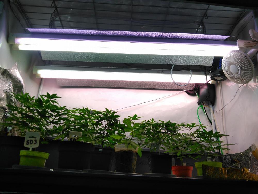 e_View up into the FluorescentTube lighting of the VeggTent.jpg