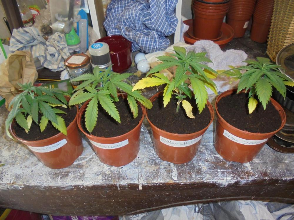 21april-2020-all-cheese-repotted.thumb.jpg.f792d01a0436e51a764b7d6e6dbacf70.jpg