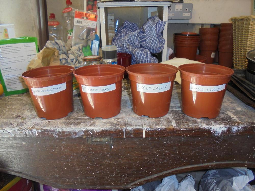 21april-2020-new-pots-ready.thumb.jpg.f20018475bc3c877f2100acbed0e7351.jpg