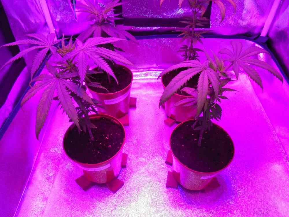 10may-2020-cheese-grow-tent-after.thumb.jpg.0c079c875c3e65458ef87f0a67f653cd.jpg