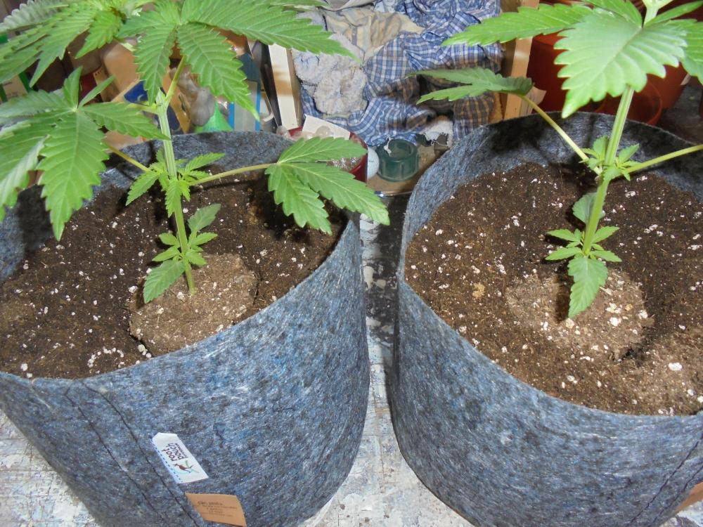 25june-2020-cw-plants-in-dirt.thumb.jpg.fce06e75083b5ac7b677b4b394640482.jpg