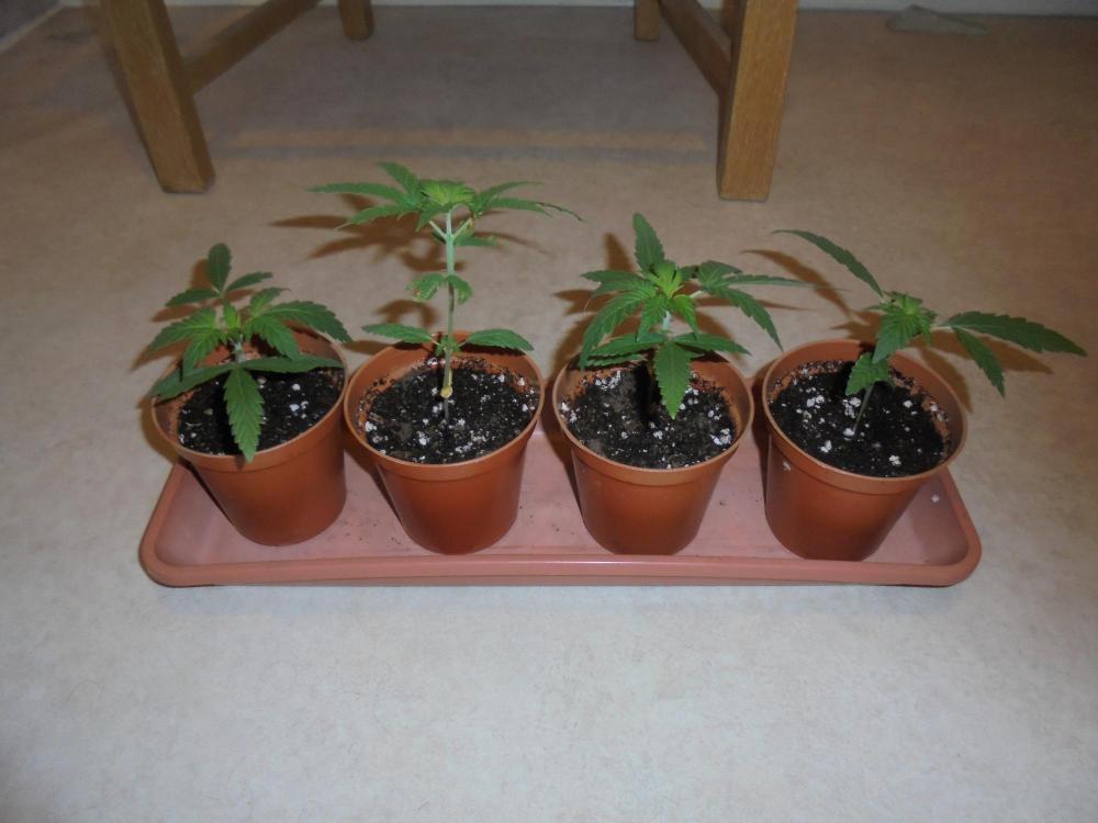 24oct-2020-sb-27sept-4-young-plants.thumb.jpg.7462a30ca9557cba27676298a0a7cf76.jpg
