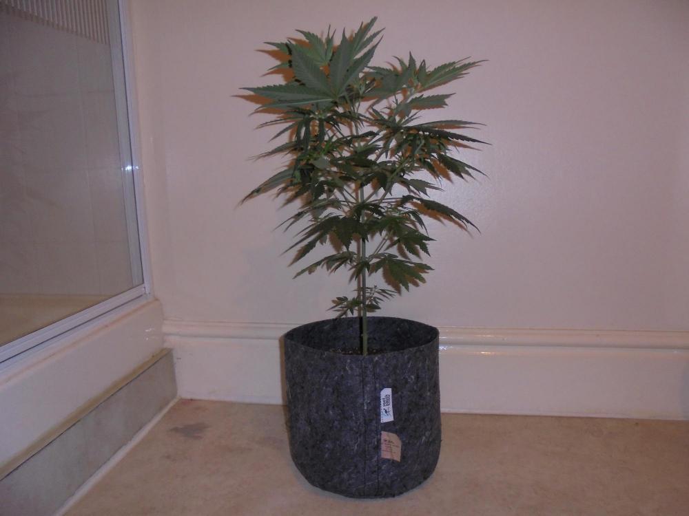 5f9da9cf0bad1_31oct-2020-sb-plant-4.thumb.jpg.4cec12c2450196cabb8624faa6bac810.jpg