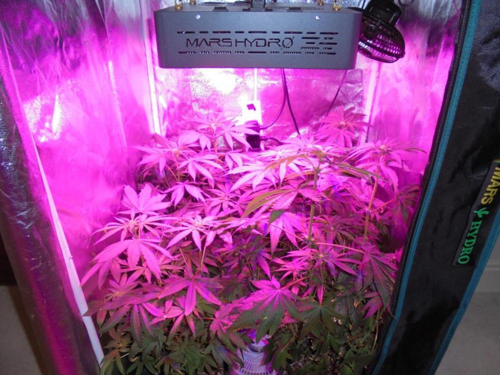 10may-2021-kj-grow-tent.thumb.jpg.ac13d825e50e006e4e04a846e98a44b8.jpg