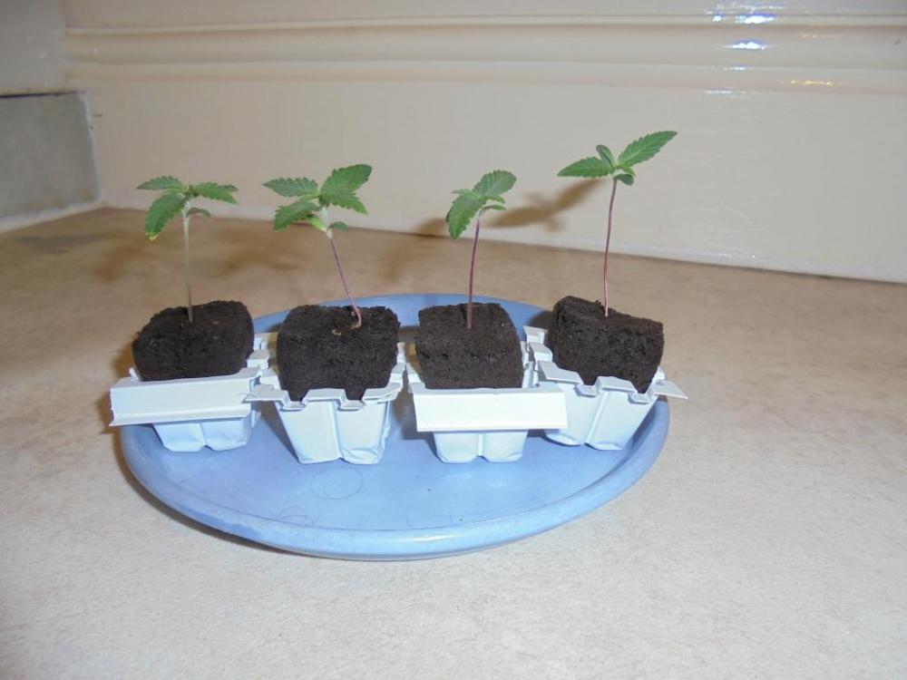 28june-2021-seedlings.thumb.jpg.ab280e8191b7d7ba24857fc6b017690e.jpg